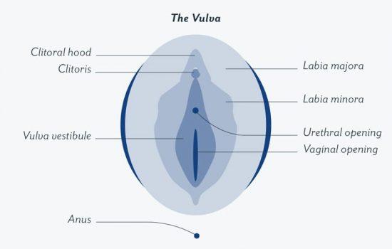 Vaginal sweat odor - kaia naturals