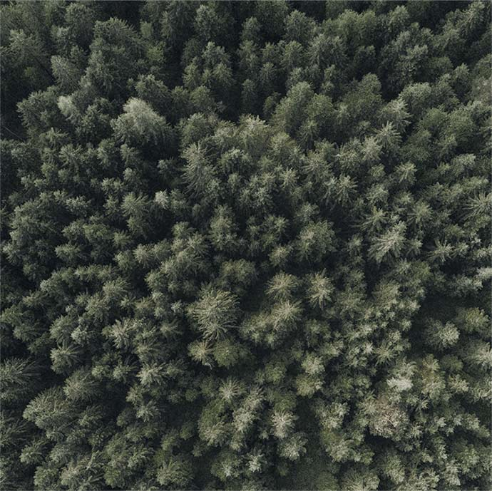 aerial shot of evergreen trees in forest